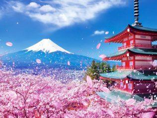OSAKA – KOBE – KYOTO – PHÚ SĨ – TOKYO   MÙA HOA ANH ĐÀO